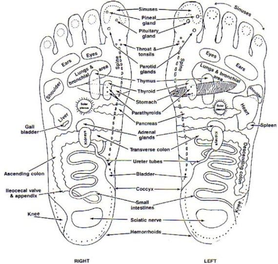 feet and organs - SaS
