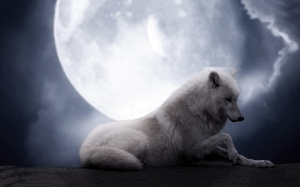 white-wolf-full-moon