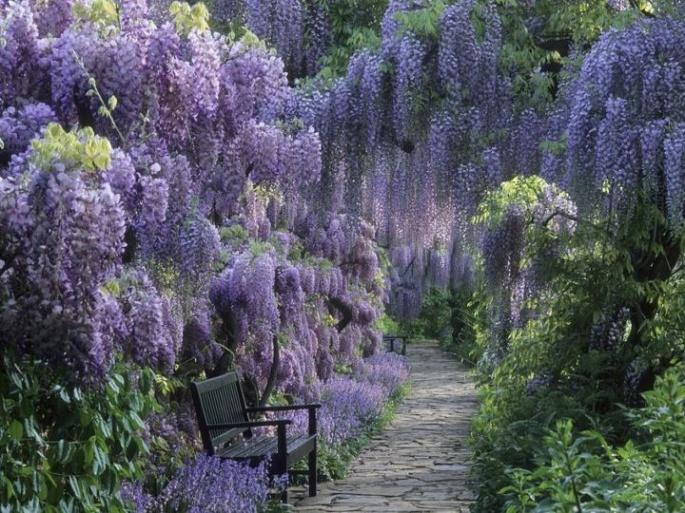 lavenderwisteriagarden