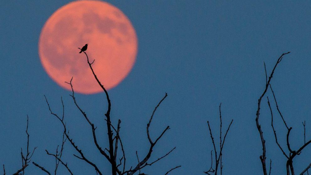 EPA_strawberry_moon4_ml_160621_16x9_992